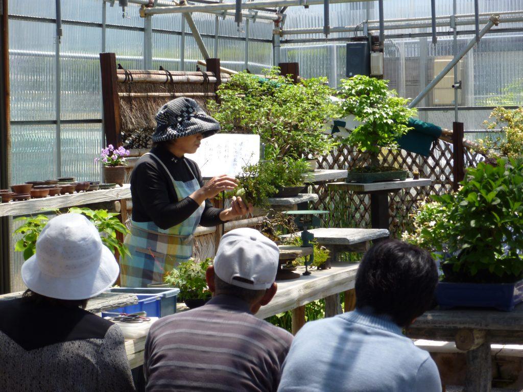 盆栽の基本を学ぶ初心者向けワークショップの様子