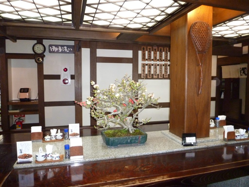 飲食店へのボケ(トウヨウニシキ)の花盆栽リース 松山園
