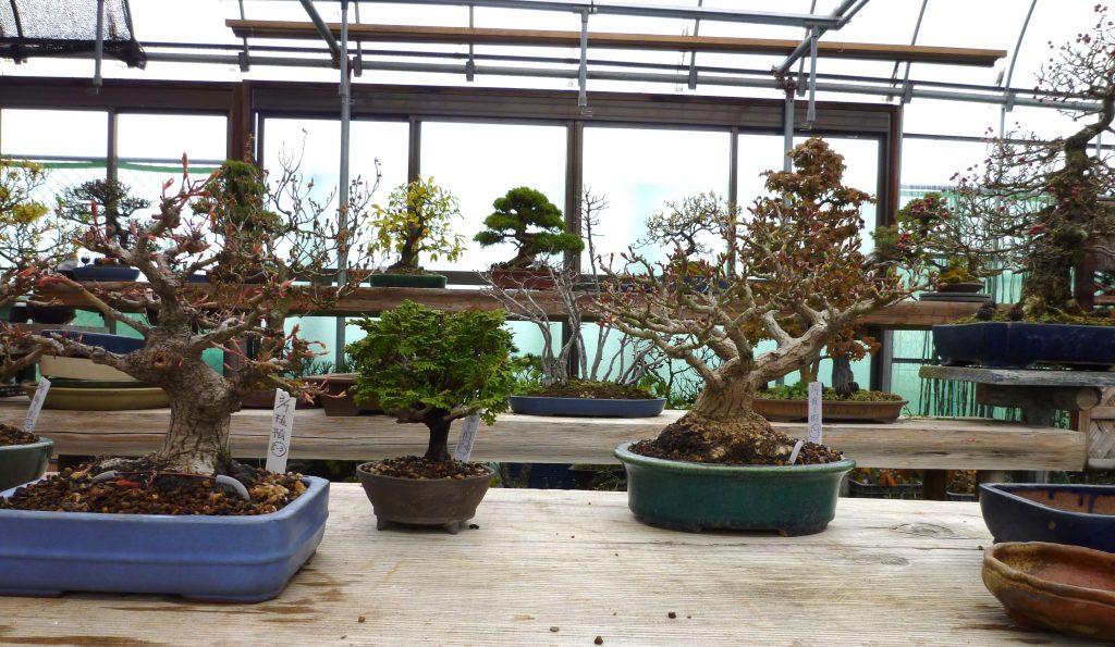 須坂市の盆栽の委託