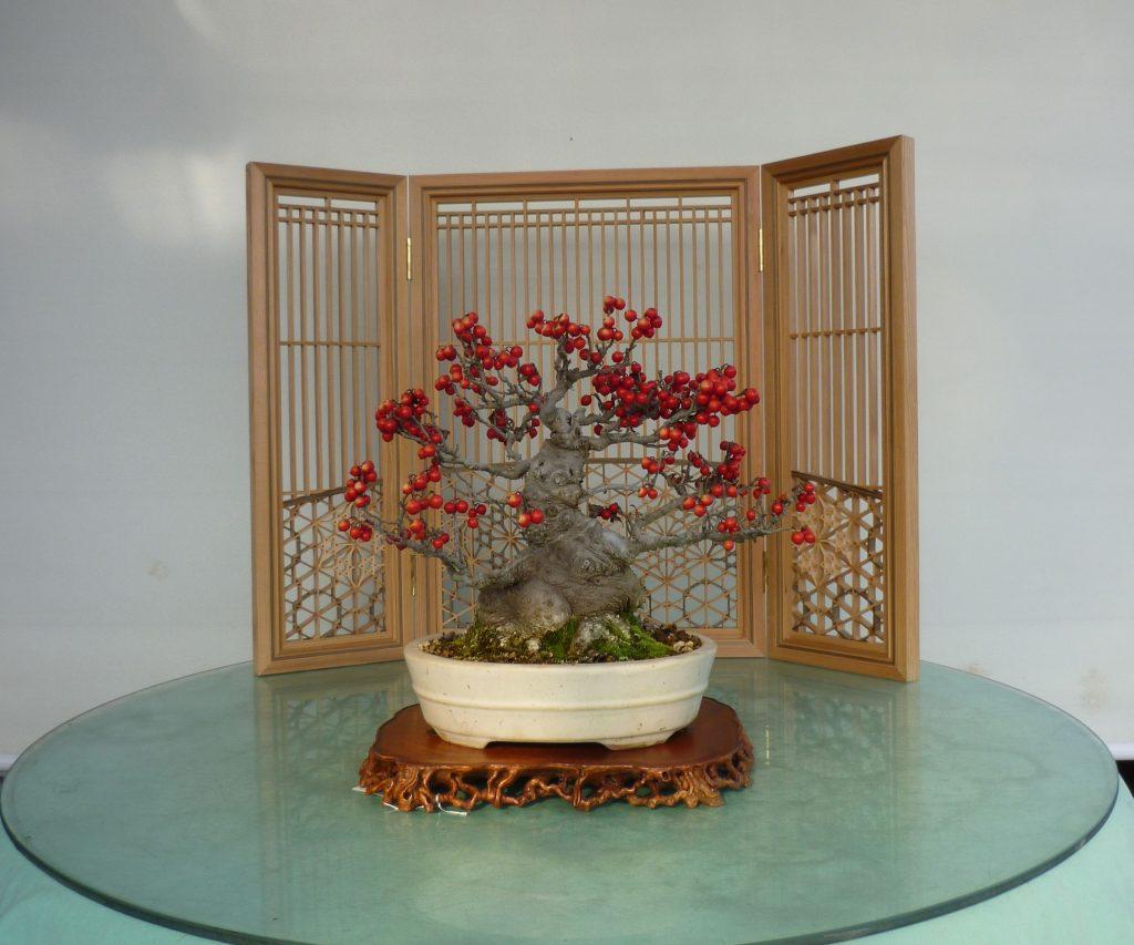 ウメモドキの実盆栽レンタル・ホテル旅館のフロントロビーにおすすめ