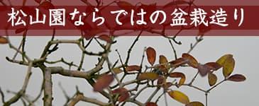 松山園の盆栽のイメージ
