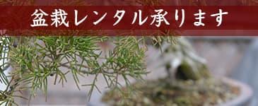 盆栽リースのイメージ