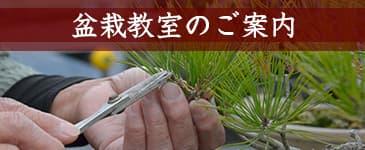 盆栽教室開催のイメージ