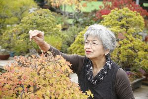 信州長野の盆栽店「松山園」山本千城子の作業風景