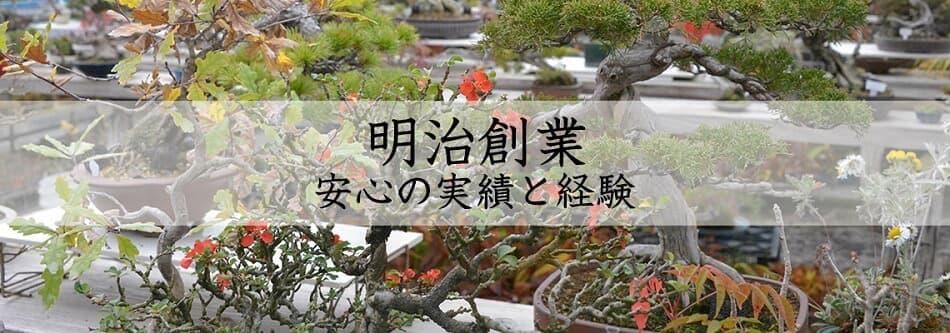 松山園は長野県須坂市にある明治創業の盆栽店