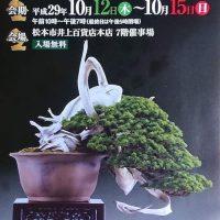 第41回信州盆栽名品展開催のお知らせ