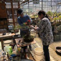 松山園盆栽教室4月の風景