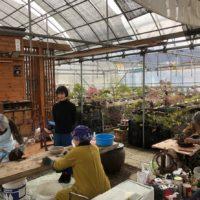 盆栽研究家の川崎仁美さんにお越しいただきました