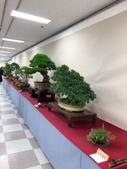 第43回信州盆栽名品展の出店盆栽