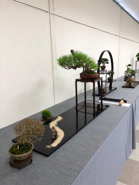 第43回信州盆栽名品展の出店盆栽2枚目