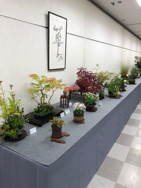 第43回信州盆栽名品展の出店盆栽3枚目
