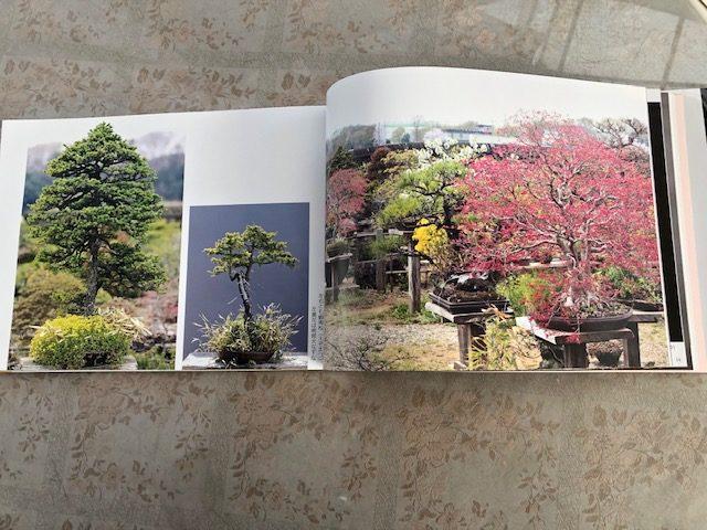 柴田さんの43年間撮りためた自然盆栽の本