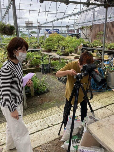 若い小品盆栽のカメラ撮影風景