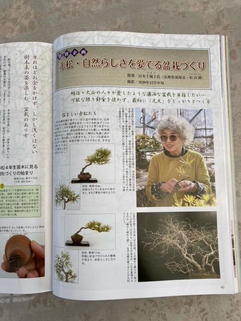 月刊近代盆栽に「赤松・自然さを愛でる盆栽づくり」と題して掲載していただきました